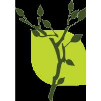 tt-leaf